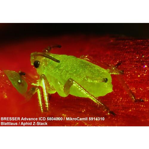 BRESSER, Advance ICD 10X-160X Zoom Stereo-Mikroskop